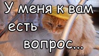 Жду ВАШИ комментарии [Vlog] шапка ДЛЯ КОТА, борщ-Lesya Life