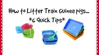 Litter Training Guinea Pigs *6 Quick Tips*