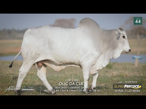 LOTE 44 - CLRP 2386