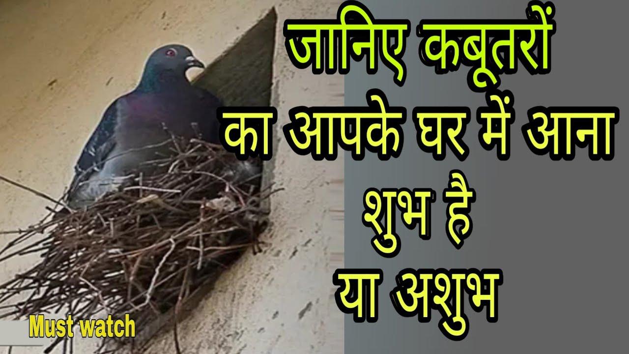 कबुतर का आपके घर में आना गूं गूं की आवाज निकालना शुभ या अशुभ Kabutar Vastu  - YouTube