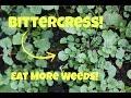 Bittercress! Eat More Weeds!