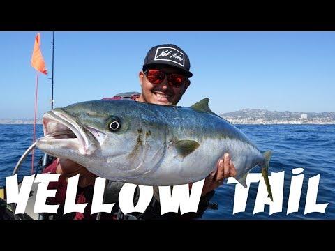 My First Yellow Tail | Kayak Fishing La Jolla, California