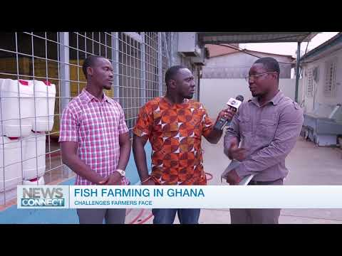 The Challenges Of Fish Farming In Ghana