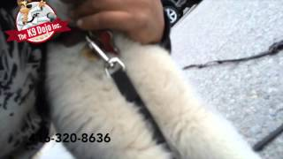 Never Before Seen Off Leash Husky Dog Training