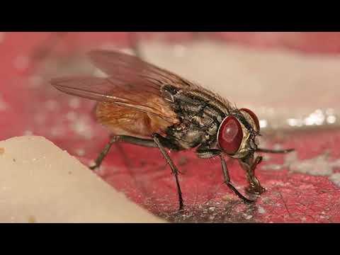 Надоели мухи?! Шесть способов, чтобы изгнать их из дома