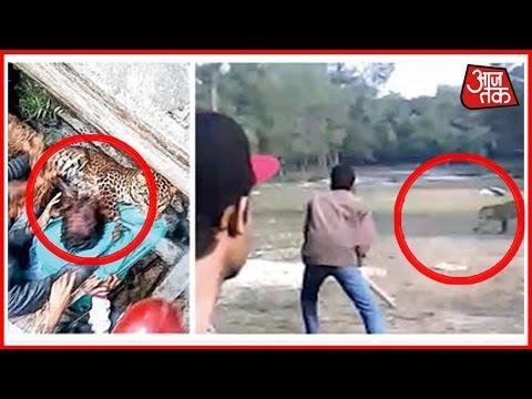 Leopard runs amok & attacks in Raiganj