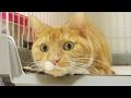 funny cat shaking head / 【猫 おもしろ】猫の首の振り方が、ときどき変になる