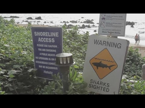 Recent spike in shark attacks not affecting Maui tourism