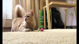 Сахарок - особенная кошка для добрых людей