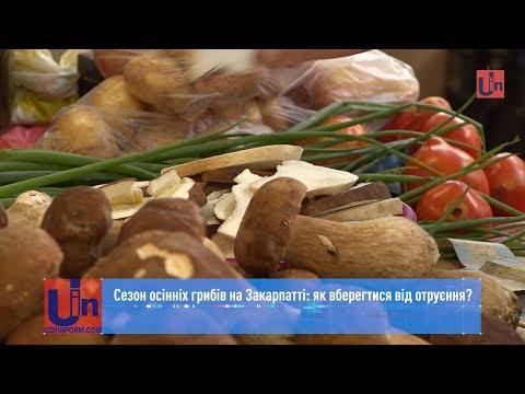 Сезон осінніх грибів на Закарпатті: як вберегтися від отруєння?