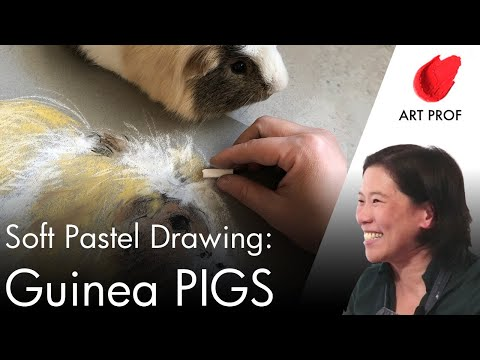 How to Draw Guinea Pigs in Soft Pastels