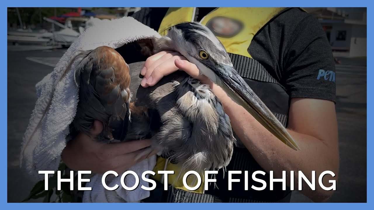 PETA Tries to Save Great Blue Heron Who Was Caught in Fishing Line