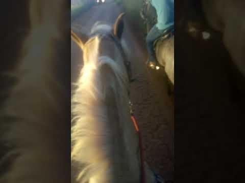 Role de cavalo