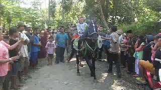 Heboohh semua orang tercengang melihat kuda ini bergoyang