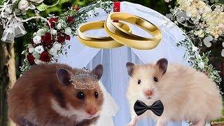 Сериал про хомяков. 1 серия. Свадьба Мауса