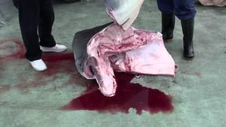 Repeat youtube video 体重300kg! イタチ鮫の解体