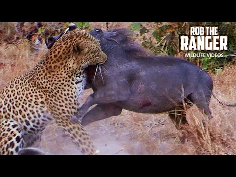 Leopard Catches A