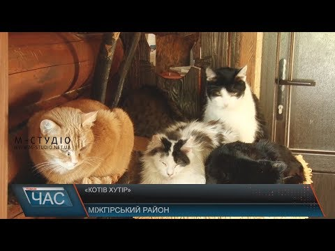 Телекомпанія М-студіо: Котів хутір