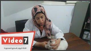 بالفيديو.. طبيبة بيطرية تشرح كيفية وقاية الحوامل من أمراض القطط