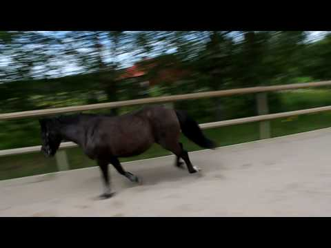 Horse jumping obstacles loose