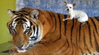 Интересные факты и мифы  о животных!  Их знают далеко не все.