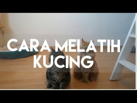 cara-melatih-kucing-|-my-cats-diary-#18