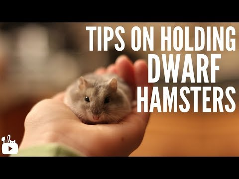 Tips on holding dwarf hamsters!