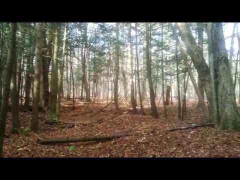 Wincanton Nature Trail, Ottawa