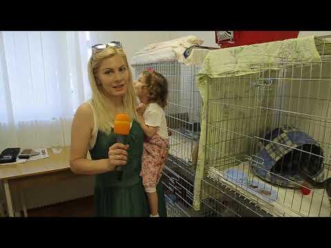 UA: Тернопіль: СЮЖЕТ - «Взяти дітей на свою роботу»
