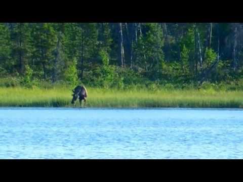 Рыбалка на верхнетуломском водохранилище 2019