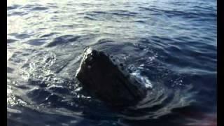 baleine raiatea polynesie