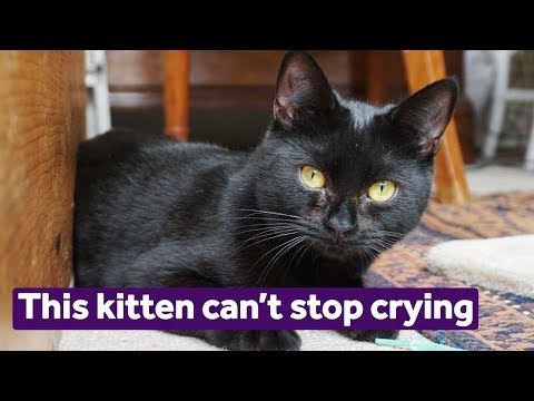 This kitten can't stop crying | Mayhew