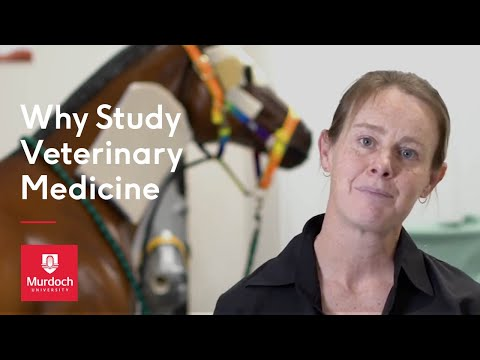 Why study Veterinary Medicine