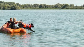 Соревнования собак-спасателей в Рязани. РВ ТВ