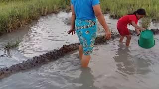 Amazing fishing at Battambang - people fishing in Cambodia - How to Catches fish (Part 110)