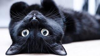 Серый кот в доме: приметы про серых котов