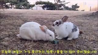 까치 설날의 공원 토끼들