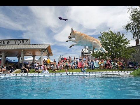 Dog jumping at Seaway Splash 2016 in Clayton, NY
