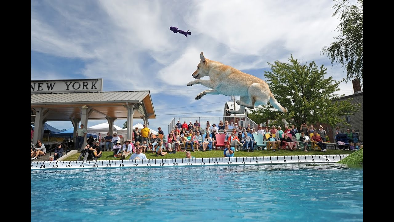 Dog jumping at seaway splash in clayton ny youtube