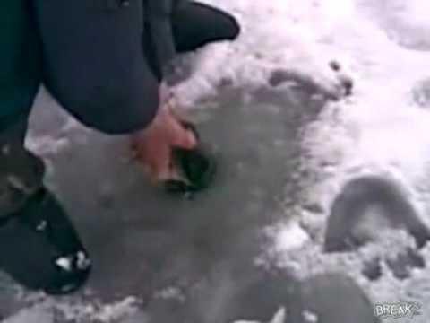 Bắt cá bự dưới lớp băng sâu
