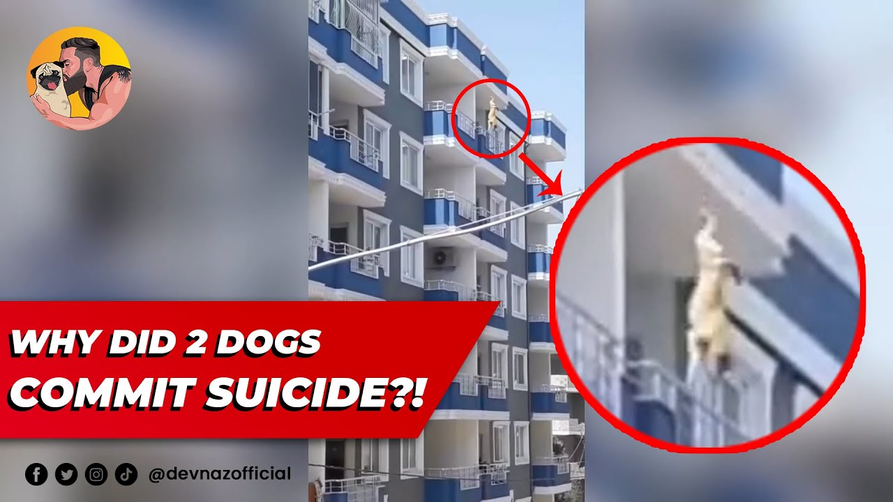 WHY DID 2 DOGS COMMIT SUICIDE?!