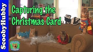 Capturing the Christmas Card -- Cat Clips #234