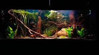 Gambar cover 500 gallon Amazonia flooded forrest,  red belly piranha aquarium,  Brazil
