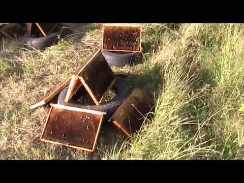 Как сушить рамки после откачки меда видео