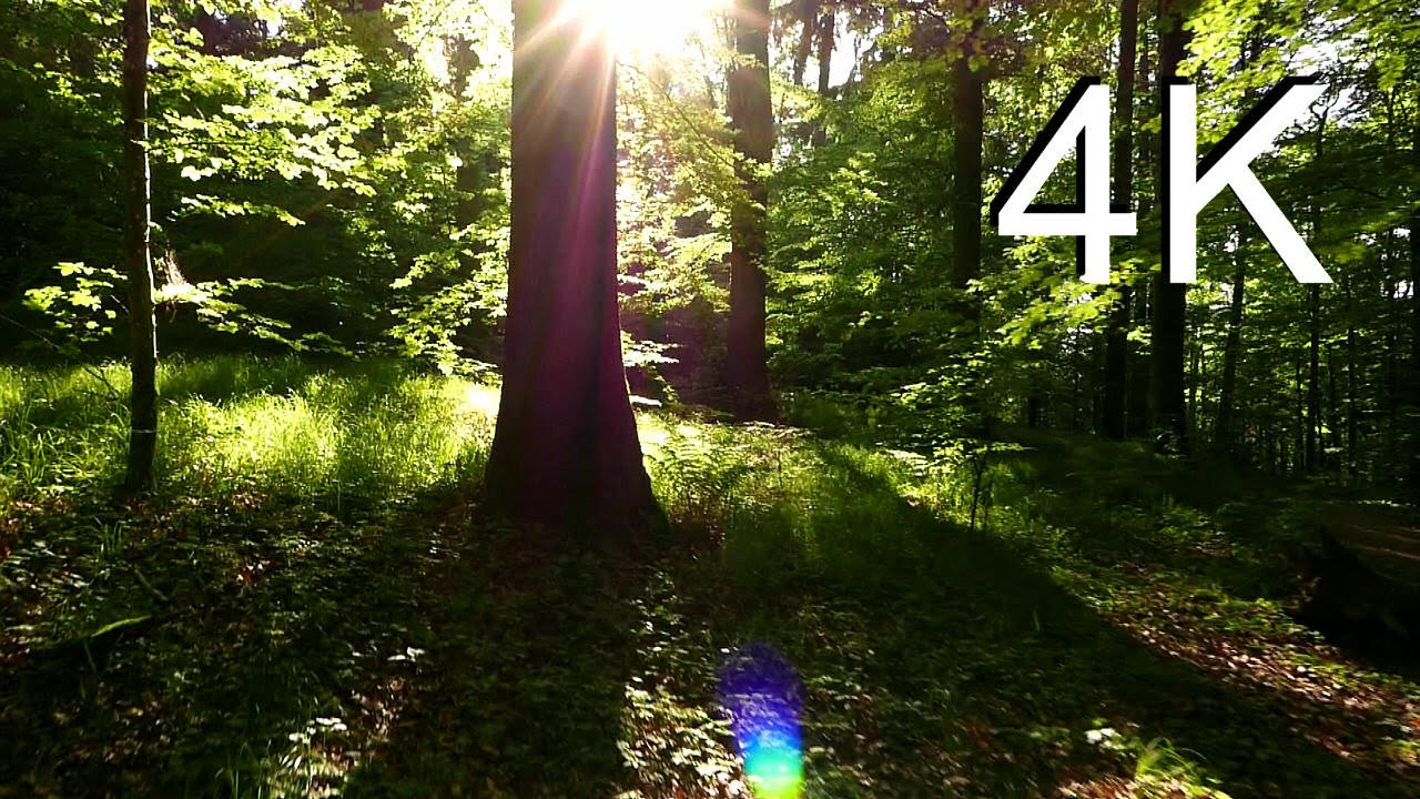 Free Fall Desktop Wallpaper 4k Nature Video May Forest Walk Youtube