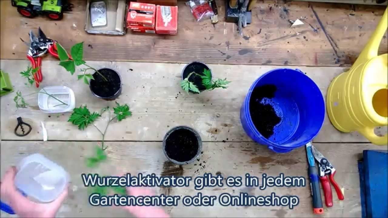 Brombeeren Pflanzen Und Schneiden ? Pflege-tipps Für Hobbygärtner Brombeeren Pflanzen Und Schneiden Pflegetipps Fur Hobby Gartner
