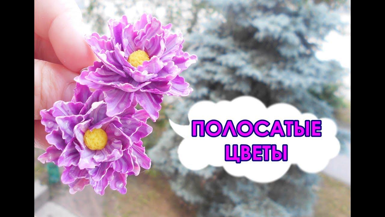 цветы в росе фото