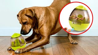 The BEST TOYS For DOGS 🐶