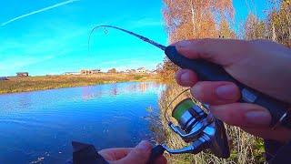 РАДИ ТАКОГО КЛЁВА СТОИЛО ЕХАТЬ - НАШЁЛ СТАЮ и начал ловить на КАЖДОМ забросе! Рыбалка на спиннинг!