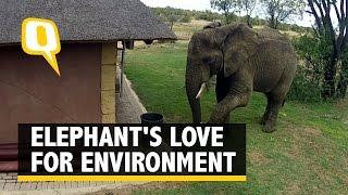 Elephant Uses Its Trunk to Pick Up and Dispose off Trash